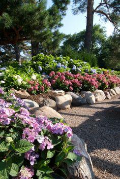 33 Best Hydrangea Gardens Images Hydrangea Garden Hydrangea