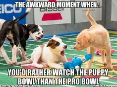 Go puppy bowl!!!!!!