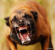 Besto of Web Escravo é condenado a ser comido por cães. Mas quando eles o veem, mostram o valor da lealdade
