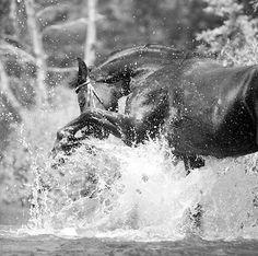 Leading UK Equine & Animal Photographer Mark Harvey