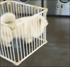 "21 Best GIFs Of All Time Of The Week | ""Your puny jail can't hold me, hooman!"""