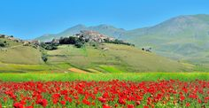 Castelluccio and Poppies... by Renato Pantini on 500px