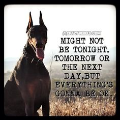 love it and saying is true. Blue Doberman, Doberman Love, Most Beautiful Dogs, Animals Beautiful, Amazing Dogs, Affirmations For Anxiety, Doberman Pinscher Dog, Group Of Dogs, Dog Items