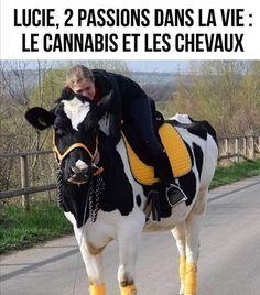 She Love Cannabis and Horses Good Ma, Horse Meme, Raising Cattle, Funny Memes, Jokes, Memes Humor, Showing Livestock, Work Horses, Work Memes