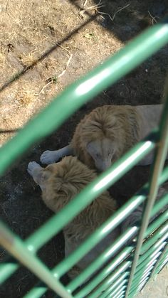 Zoo Arcachon - 26