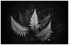 Plant Leaves, Nature, Plants, Outdoor, Ferns, Outdoors, Flora, Plant, Outdoor Games