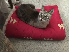 Terri Stegmiller Art and Design: Pets on Quilts 2016