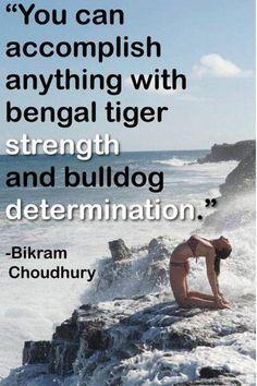 You can accomplish anything with bengal tiger strength and bulldog determination - Bikram Choudhury #bikramyoga