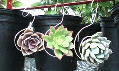 succulent ornaments florapacifica.com