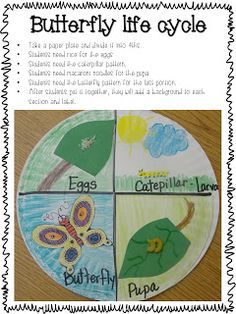 Life Cycle Update! - Use with Grade 1 Unit 3 - I'm a Caterpillar