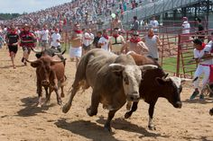 WTF?! Running of the Bulls Actually Exists in the U.S.
