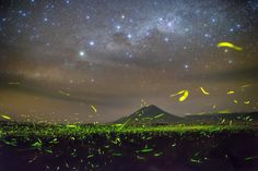 Fireflies flit across a starlit field on a summer's night. Image credit and copyright: Steed Yu & NightChina.net