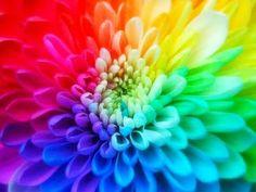 Cromoterapia: Colores que curan.Interesante enlace.