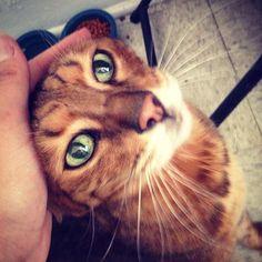 Enlace permanente a lo adoptado un Venture Nombrado 14 años Gato