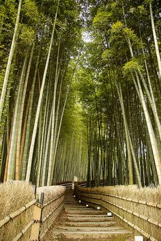 bamboo Gardens | Bamboo garden Arashiyama, Kyoto | Flickr - Photo Sharing!