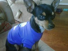 DOG LOST - GARDENDALE, AL: dog lost Feb 12 on New Castle Road and Tarrant Road in Gardendale. Approx 5 lbs. Contact (205) 901-9747 or (205) 705-5710