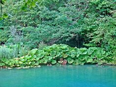 Blue Lagoon of Kilkis - Macedonia Greece Macedonia Greece, In Ancient Times, Blue Lagoon, Rivers, The Locals, Lakes, Greek, Herbs, Outdoor