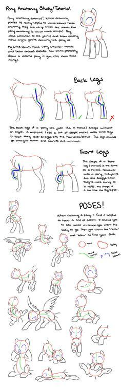 Pony Anatomy Tips/Study/Tutorial by kilala97