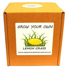 Grow Your Own Lemon Grass Plant Kit - Planting kit for children and adults Garden Gifts, Grow Your Own, Lemon Grass, Planting, Kit, Children, Birthday, Christmas, Young Children