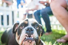 Sir Beefy Wellington | 16 Of The Cutest Dogs At The World's Ugliest Dog Contest