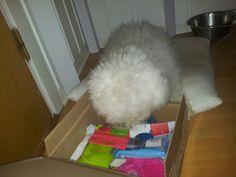Vanilla - DoggieBag.no #DoggieBag #Hund Dogs, Animals, Pet Dogs, Animales, Animaux, Doggies, Animal, Dog, Animais