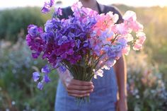 Bliss - a bouquet of sweet peas! these smell amazing Sweet Pea Bouquet, Sweet Pea Flowers, Beautiful Flowers, Fresh Flowers, Flower Farm, Flower Images, Planting Flowers, Flower Arrangements, Wedding Flowers