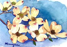ACEO Limited Edition 2/25- Square dance, Dogwood flower painting, Art card of an original watercolor painting by Anna Lee, Housewarming gift