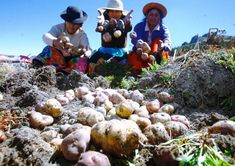In the context of the COVID-19 pandemic, Peruvians are facing exceptional challenges as individuals and communities throughout the country… Food Policy, Sustainable Food, Environmentalist, Health And Safety, The Locals, Pumpkin, Outdoor, Diversity, Sustainability