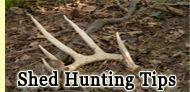 Deer Antler Shed Hunting Tips