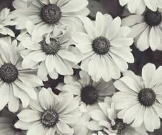 Flowers is love,okay no :3