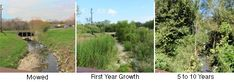 Riparian Restoration - Letting the Veg grow back in No Mow Riparian Zones. Helps each ecosystem that touches this hybrid zone