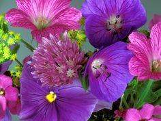 Flores Purpuras 4