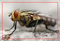 Citi Pest Control offers flies control treatment to eradicate flies infestation and protect you by creating a hazard free environment. Our herbal treatment includes Anti-maggots, Baiting, Trappina, and the Space spraying fogging which is 100% safe for the health. Our team of experts will protect you from the flies and offer you a safe, clean, effective and reliable solution for pest control in Warje, Pune.