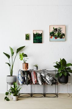 Stylish and Contemporary Interior Greenery Ideas