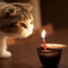 Cat Birthday Cake Recipe http://www.eve.com.mt/2013/12/15/cat-birthday-cake-recipe/