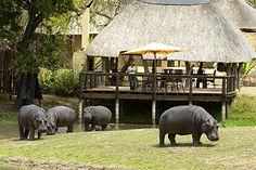 Kruger National Park, Mpumalanga, South Africa.