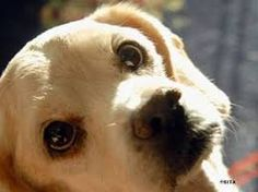 Výsledek obrázku pro pes