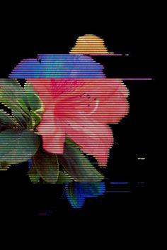Virtually flower