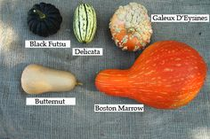 Ideas for growing cool weather crops in fall and winter.