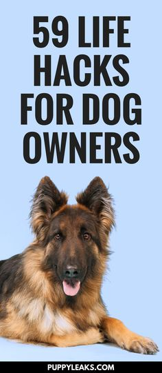 59 Life Hacks For Dog Owners