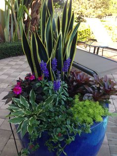 Ideas For Succulent Garden Containers House Plants Succulent Gardening, Garden Planters, Succulents Garden, Planting Flowers, Patio Plants, Outdoor Plants, Outdoor Gardens, House Plants, Potted Plants