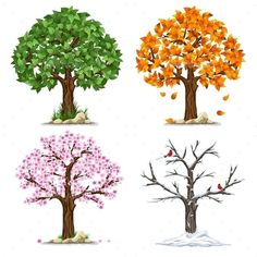 Buy Four Seasons by mari_pazhyna on GraphicRiver. Tree in four seasons – spring, summer, autumn, winter. Isolated on white background. Each tree i. Four Seasons Painting, Four Seasons Art, Four Seasons Nursery, Summer Trees, Spring Tree, Orquideas Cymbidium, Buch Design, Tree Illustration, Watercolor Trees