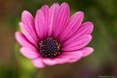 https://flic.kr/p/9xkdrH | Flower | Flower