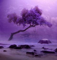Purple Blue Jay under Purple Umbrella on a very Purple Beach. Purple Beach, Purple Love, All Things Purple, Deep Purple, Purple And Black, Purple Art, Purple Stuff, Fuchsia, Purple Hues