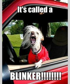 And I know your vehicle comes equipped with 'em!!! Adam says this is me every time I drive.. Sad, I know.