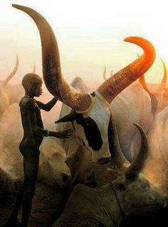 Long horned cattle.