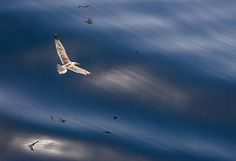 Flying And Waves by Cristina-Velina Ion