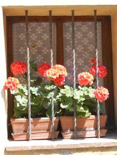 Montalcino morning