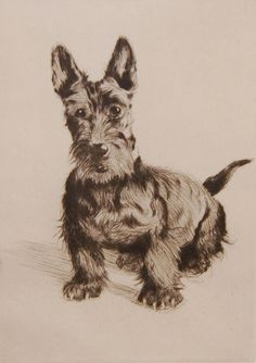 Click to see full size: Scottish Terrier- Engraving of Scottish Terrier circa 1920