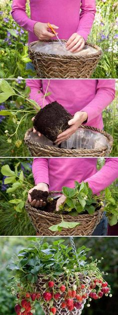 Don't have extra space for growing your favorite fruit? Making hanging baskets is a great idea to let you have a big harvest on small patios.